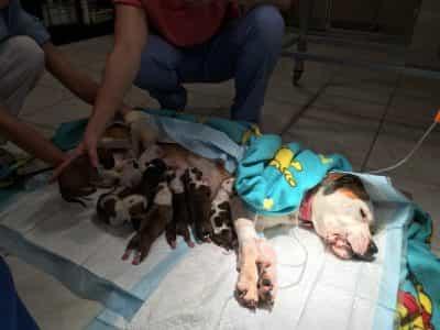 koerte ravi kutsikatega